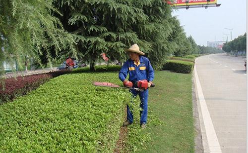 绿环园林 小区绿化养护