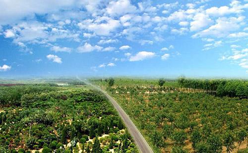 丽水绿环园林苗圃